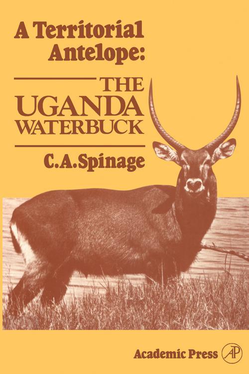 A Territorial Antelope: The Uganda Waterbuck