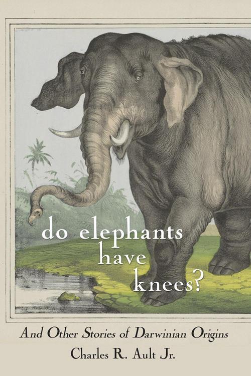 Do Elephants Have Knees?